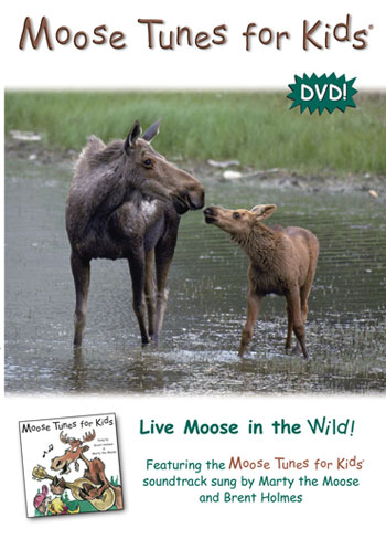 Brent Holmes There S A Chocolate Moose On The Loose
